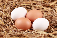 Eggs in straw Royalty Free Stock Image