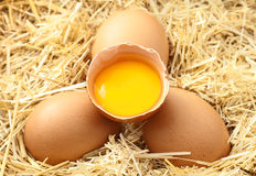Eggs on Straw Stock Photography