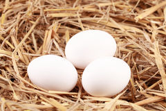 Eggs in straw Stock Images