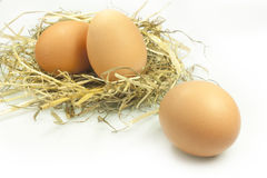 Eggs in the straw. Chicken eggs laid on straw Royalty Free Stock Photos