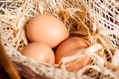 Eggs in the straw and basket Royalty Free Stock Images