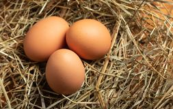 Eggs on a straw bed royalty free stock photo