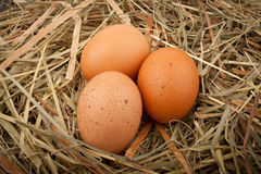 Eggs in straw nest Royalty Free Stock Image