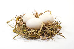 Eggs in straw nest. On white background Royalty Free Stock Images