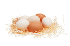 Eggs in straw nest. Eggs in straw nest  on white background Stock Photography