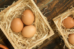 Eggs on straw stock image