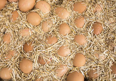 Eggs in straw Royalty Free Stock Photography