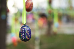 Eggs. Suspended on a ribbon Easter egg Royalty Free Stock Photo