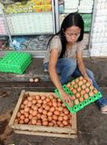 Eggs. Traders are sorting eggs in the city of Solo, Central Java, Indonesia royalty free stock photos
