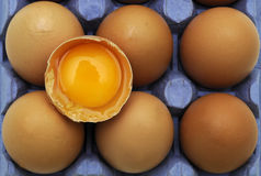 Eggs in tray. Stock Images
