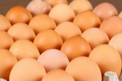 Eggs in tray stock image