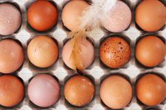 Eggs in the tray. Beautiful raw chicken eggs in a tray Stock Images
