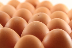 Eggs on tray. Closeup of eggs on tray, isolated on white Stock Image