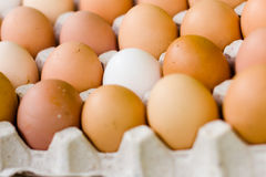 Eggs in a tray of eggs Stock Photos