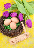 Eggs and tulips Stock Photos