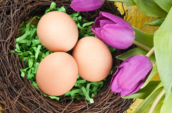 Eggs and tulips Royalty Free Stock Image