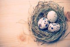Eggs_v Stock Photos
