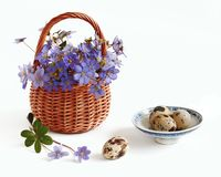 Eggs and violets Stock Image