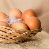 Eggs in wattled basket Stock Image