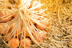 Eggs in weave basket on dry straw. Background Royalty Free Stock Photo