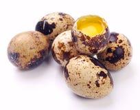 Eggs weibliche Wachteln Stockfotos