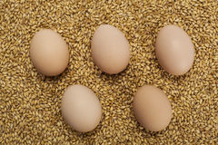 Eggs on wheat grains Stock Photography