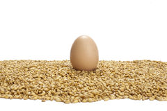 Eggs on wheat grains Stock Image