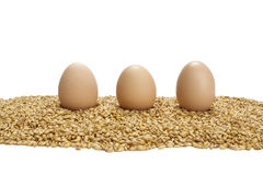 Eggs on wheat grains Royalty Free Stock Image