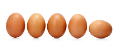 Eggs on white. Five eggs on white background Stock Images