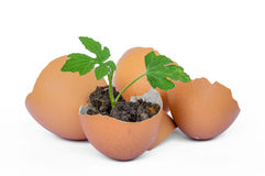 Eggs on a white background. Royalty Free Stock Photography