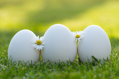 Eggs and white flower Stock Images
