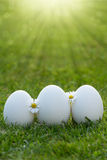 Eggs and white flower Royalty Free Stock Photos
