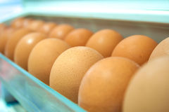 Eggs on a white shelf Royalty Free Stock Images