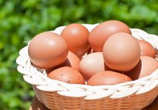 Eggs in a wicker basket. Stock Photo