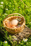 Eggs in a wicker basket Stock Photo