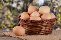 Eggs in a wicker basket on a wooden board with blurred garden background.  stock images