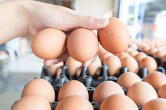 Eggs in woman hand wholesale market Stock Image