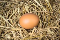 Eggs on wood background Royalty Free Stock Image