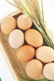 Eggs in wooden box Stock Image
