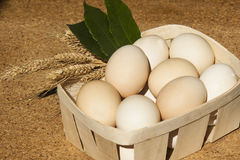 Eggs in wooden square Royalty Free Stock Image