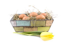 Eggs and yellow tulip in flowerpot Royalty Free Stock Photos