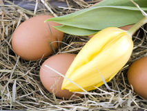Eggs and yellow tulip lying on hay Royalty Free Stock Photo