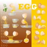 Eggs, yolks, albumen, eggshells, glass bowls. Stock Photos