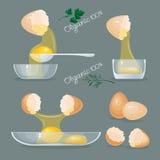 Eggs, yolks, eggshells, glass bowls. Royalty Free Stock Photography