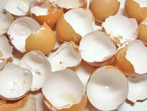 Eggshel stock afbeelding