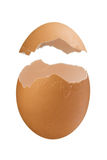 Eggshell που απομονώνεται στην άσπρη ανασκόπηση Στοκ φωτογραφίες με δικαίωμα ελεύθερης χρήσης