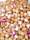 Eggshell коричневых яичек Стоковое фото RF