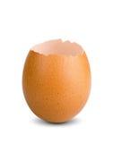 Eggshell Obraz Royalty Free