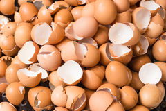 eggshell fotografia stock libera da diritti