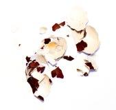 eggshell immagine stock